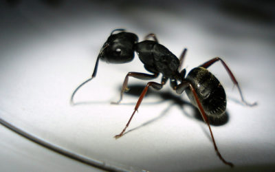 How to Protect Your Office Against Pests During the Summer