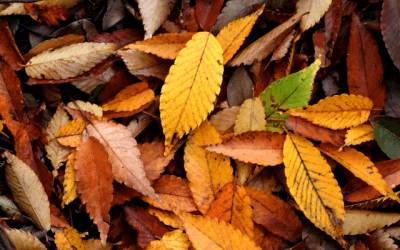 Why Autumn Cleaning is Just as Crucial as Spring Cleaning