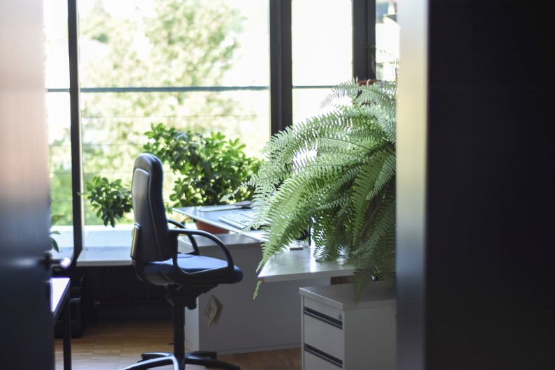 How to Look After your Office Plants (& Why you Should Bother!)